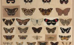 Jean Loubeau ~ Moths andButterflies